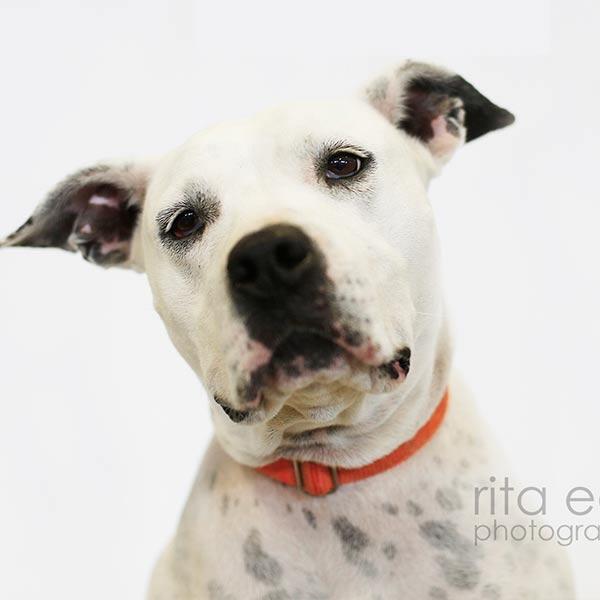 Adopt Duchess!