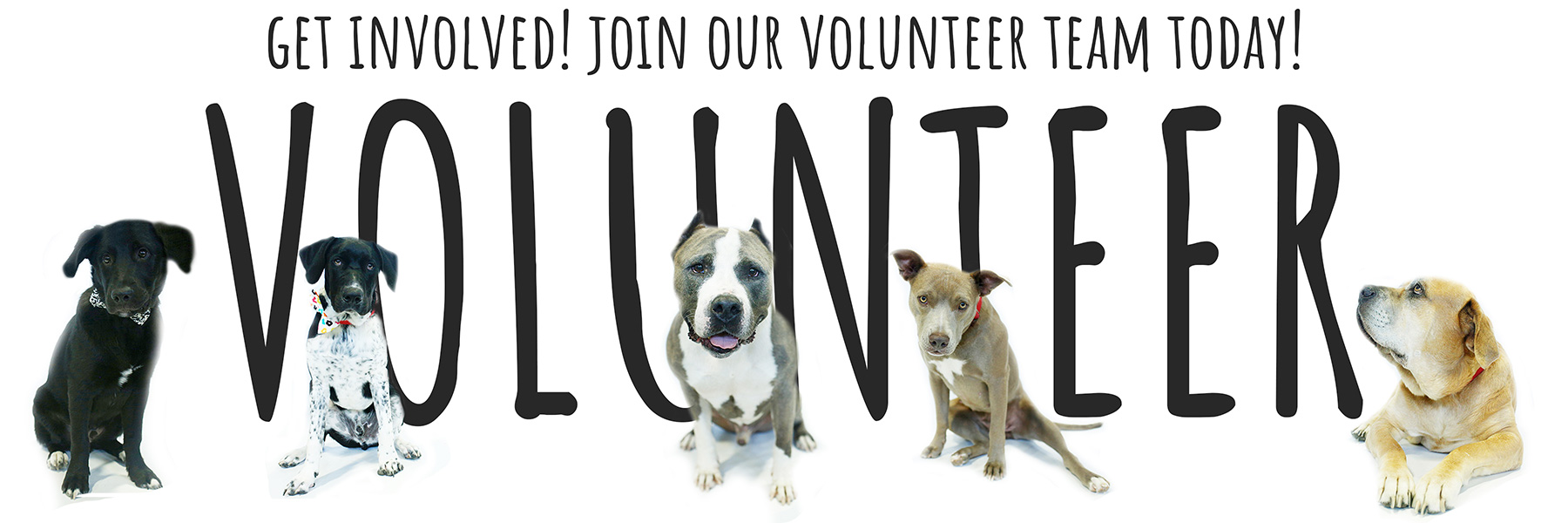 Paws For Live Volunteer program