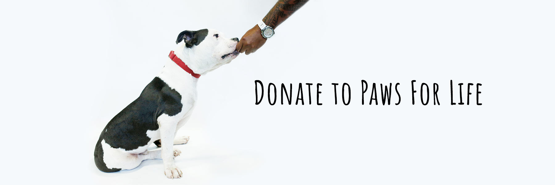 Donate To Paws For Life