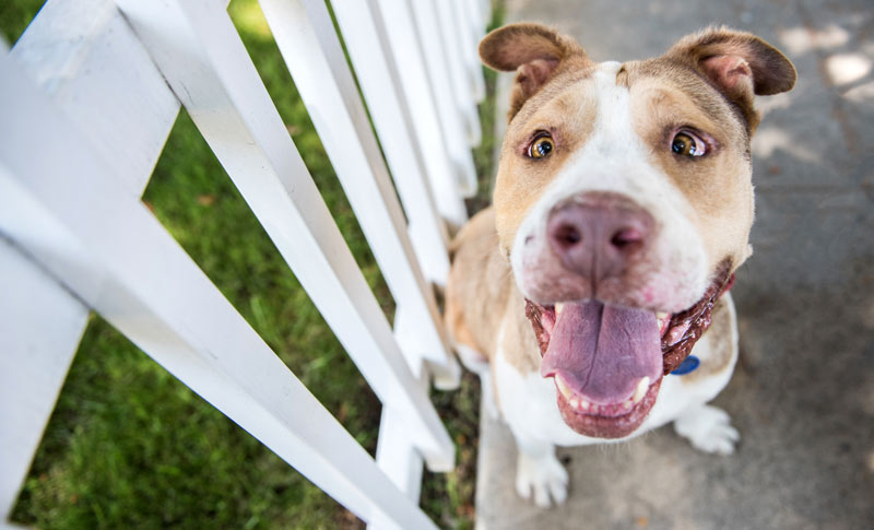 Dogs and balconies and fences