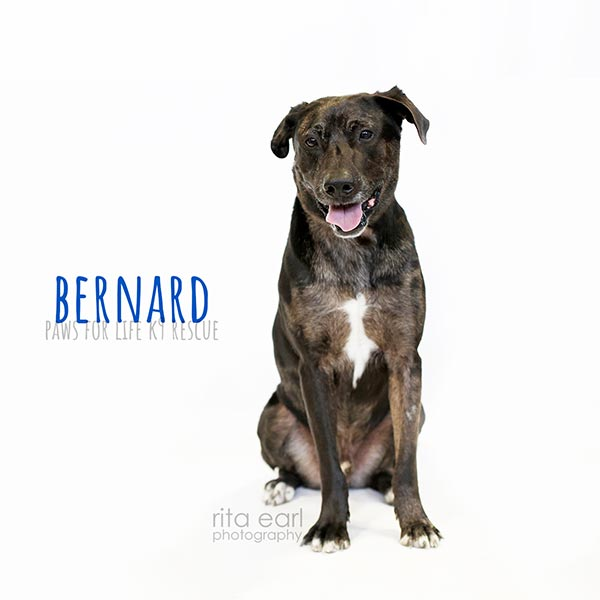 Adopt Bernard!