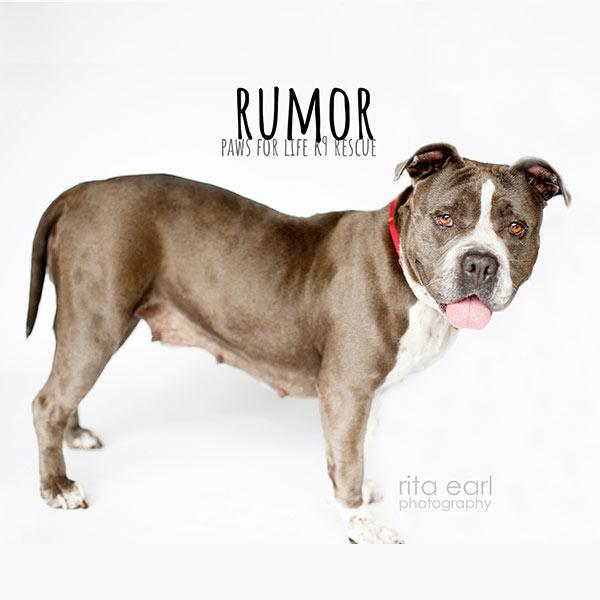 dogs-800-rumor-03