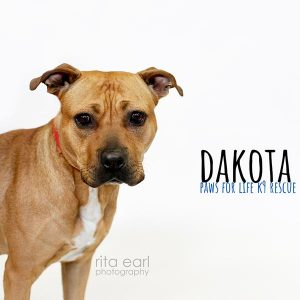Adopt Dakota!