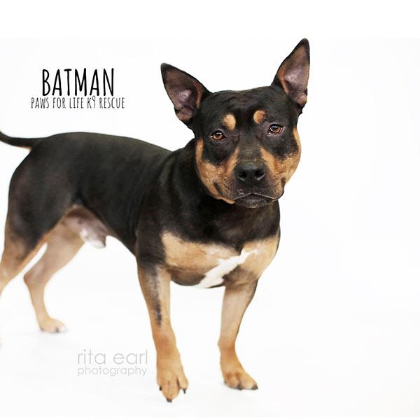 Adopt Batman!