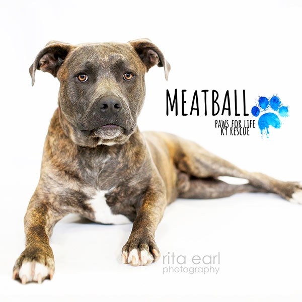 Adopt Meatball!