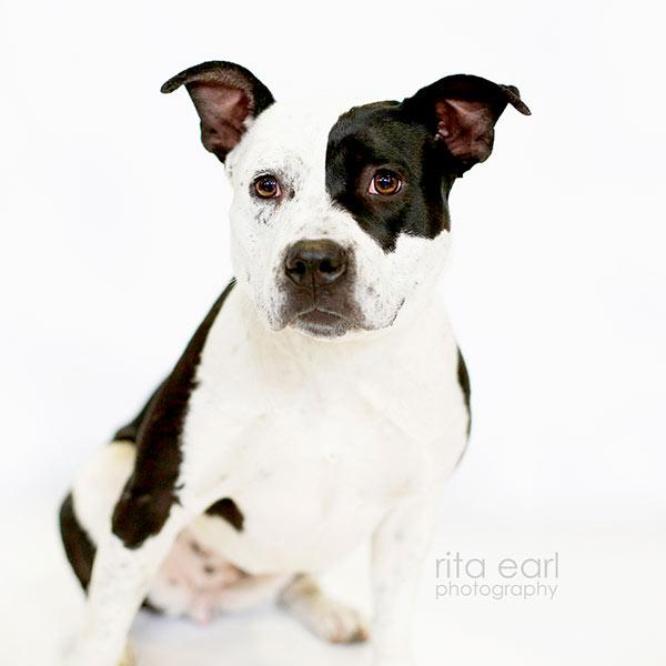 Adopt Oreo!