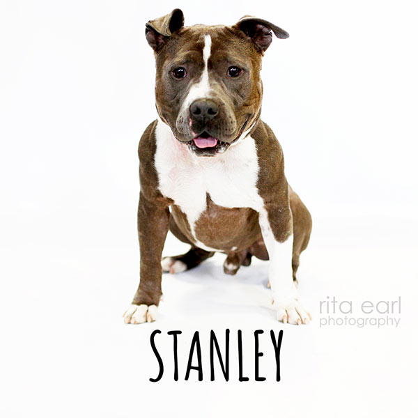 Adopt Stanley!