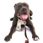 Adopt Chase!