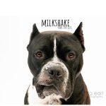 Adopt Milkshake!