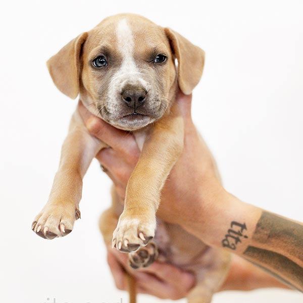 Adopt Chino!
