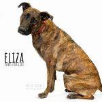 Adopt Eliza!