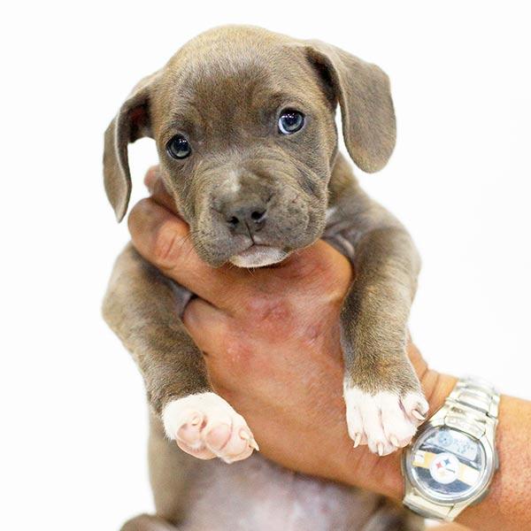 Adopt Sierra!
