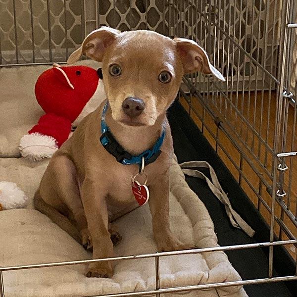 Adopt Ollie!