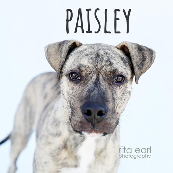 Adopt Paisley!