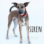 Adopt Siren!