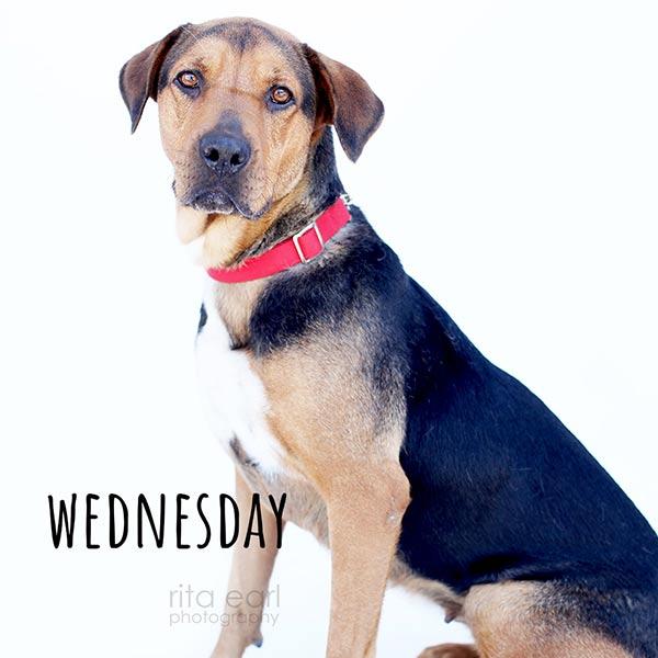 Adopt Wednesday!