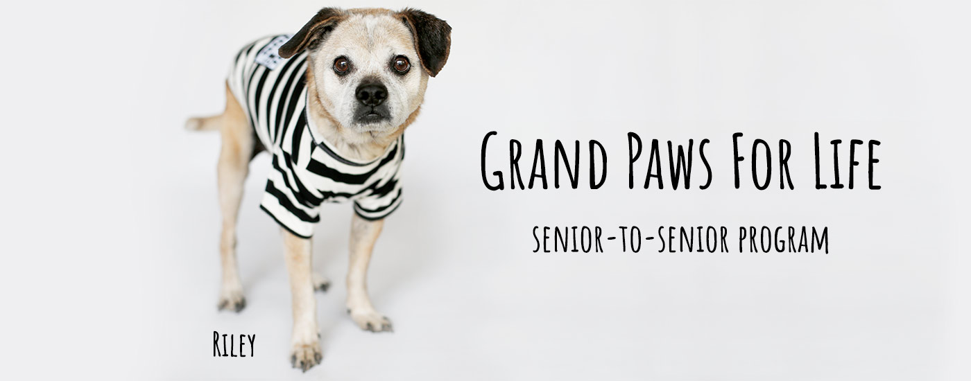 Grand Paws for Life Prison Program