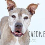 Adopt Capone!