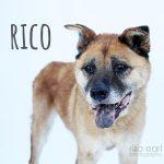Adopt Rico!