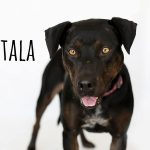 Adopt Tala!