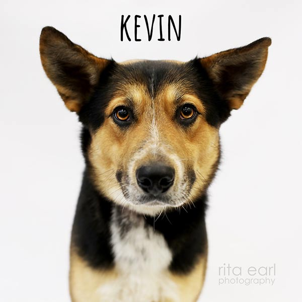 Adopt Kevin!