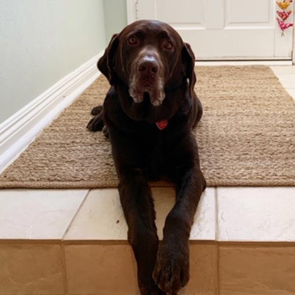 Adopt Buddy!