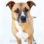 Adopt Roscoe!