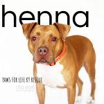 Adopt Henna!