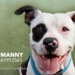 Adopt Manny!