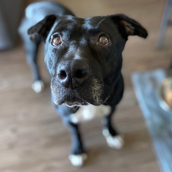 Adopt Nora!