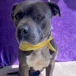 Adopt Bruno!