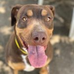 Adopt Lucy!
