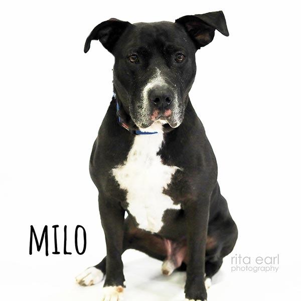 Adopt Milo!