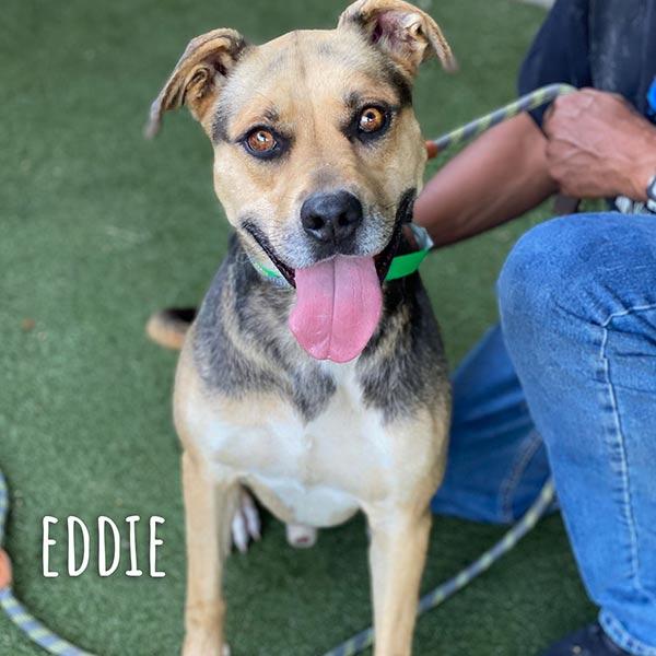 Adopt Eddie!