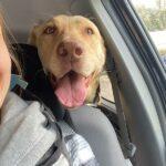 Adopt Lexi!