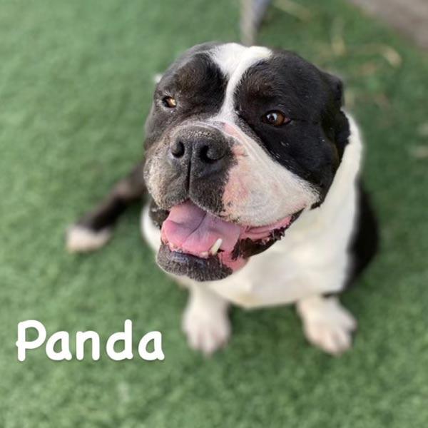 Adopt Panda!