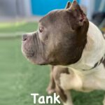 Adopt Tank!