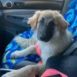 Adopt Kiwi!