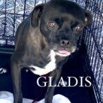 Adopt Gladis & Gilbert!