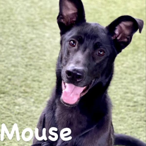 dogs-800-mouse-01a