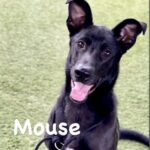 Adopt Mouse!
